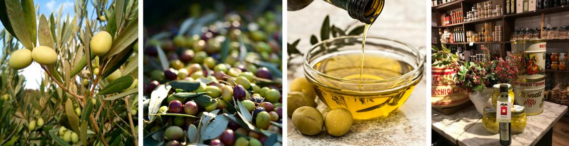 Olive sull'albero, olive nere e olive verdi su tavolo, Ciotolina con olio e olive accanto, Prodotti azienda Olivi di Gianpa