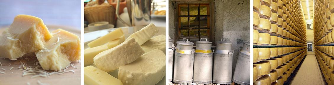 Grana Padano pezzi, formaggio bianco, bidoni per latte, forme di formaggio sugli scaffali caseificio