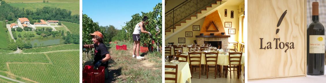 Immagini dell'azienda Tosa: veduta aerea, lavoro nelle vigne, il ristorante, bottiglia di vino la Tosa