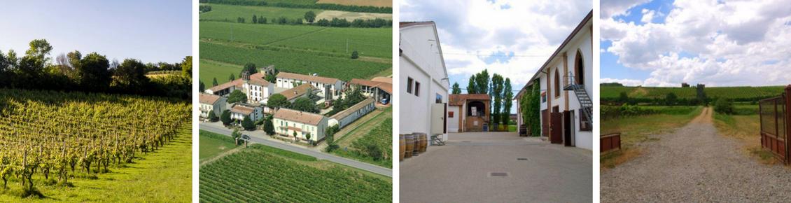 Cantine Romagnoli - immagini del vitigno, della corte interna, dell'azienda dall'alto, dell'entrata verso la vallata